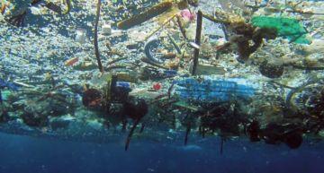 過度捕撈!專家預測30年內「海洋魚種全消失」 馬臉姐淚崩了