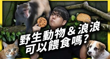 野生動物可以亂餵?志祺七七曝「4致命問題」:恐害死牠們
