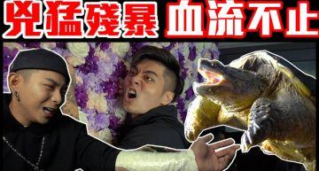 遭鱷龜咬著不放!瘋男放送事故「爆血狂流」 網:下次換鱷魚