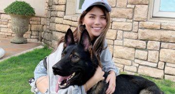 狂聞下面120秒!蕾菈再遇狼犬「慘遭撲倒狂嗅」:安排健康檢查