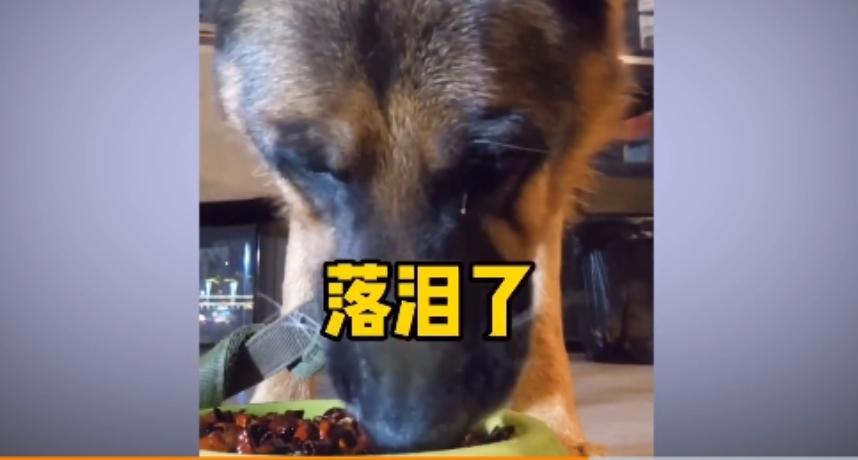 餵狗吃辣椒、跳跳糖!大陸驚見「寵物大胃王」 網罵爆:主人有病