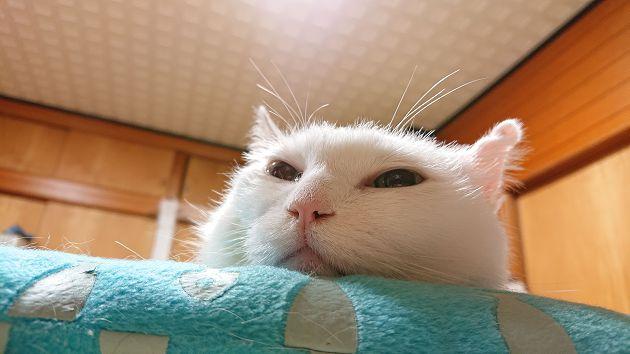 貓咪真的是液體!「梗圖始祖」18歲高齡去世 主人:不敢相信