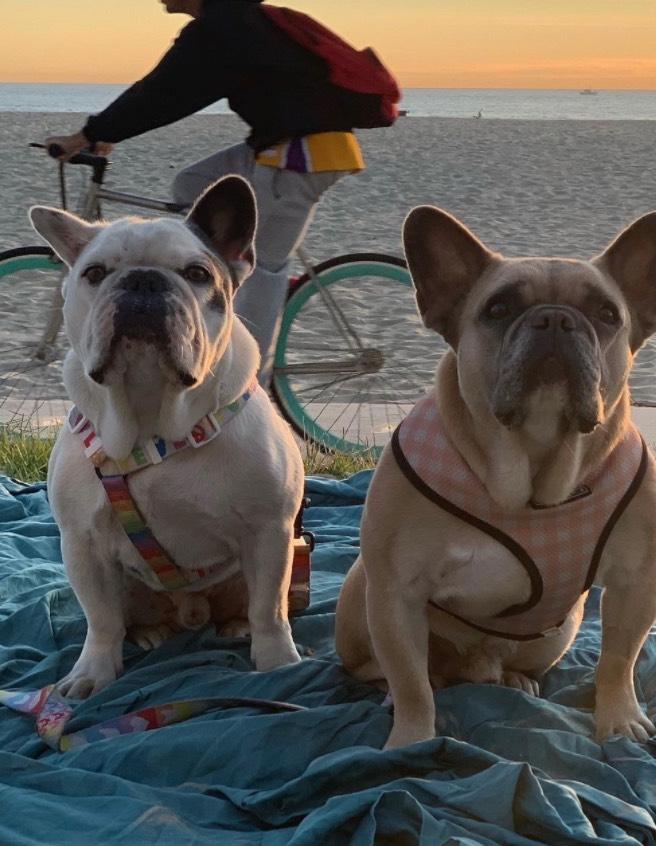 Lady Gaga日前因為人在羅馬拍攝新電影《Gucci》,因此請遛狗員幫忙照顧待在家中的三隻愛犬:Asia、Koji、Gustavo。不料24日晚間,遛狗員帶狗狗們出門散步時,竟然當街遭到歹徒襲擊。  據CNN報導,洛城警方事後取得事發時監視器畫面,發現一輛當時有台白色轎車突然停下,隨後有兩人下車並和遛狗員搭話。但看似正常的舉動在下一秒卻完全變調,兩位歹徒竟朝他連開四槍,並搶走了Koji和Gustavo兩隻狗狗。整個行搶過程不到2分鐘,而該段畫面也被《TMZ》公開,引起熱議。  遛狗員當下重傷倒地,隨即被送往醫院搶救,所幸沒有生命危險,而兩名歹徒也遭到警方鎖定。  Lady Gaga事後在網路上崩潰發文,表示自己的兩隻愛犬被擄走後,心情相當沮喪,也願意祭出50萬美元(約台幣1400萬元)尋回狗狗們,並表示若有民眾無意間購買到這兩隻狗的話,只要願意歸還,同樣會給出相同的獎金。  而今日稍早據外媒報導,Lady Gaga的兩隻愛犬被一名女子送還至警局,並在其經紀人與私家偵探的確認下,認出他們就是Koji和Gustavo。  此外據警方表示,歸還狗狗的女子確認與當日晚間的搶案無關,因此仍會盡全力追查歹徒下落。