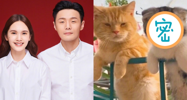 貓界「李榮浩夫婦」曝光!長相「99%神撞臉」 照片引萬人瘋傳!