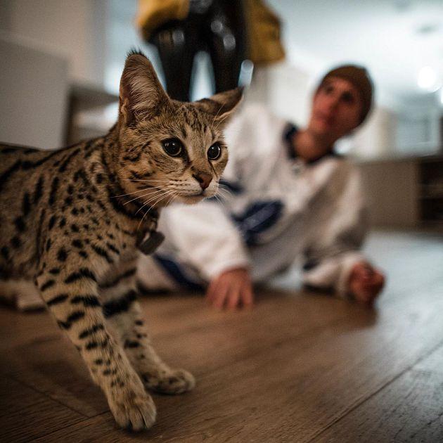 小賈斯汀砸「108萬買特種貓」不到一個月就走丟!被發現模樣曝光:又冷又瘦